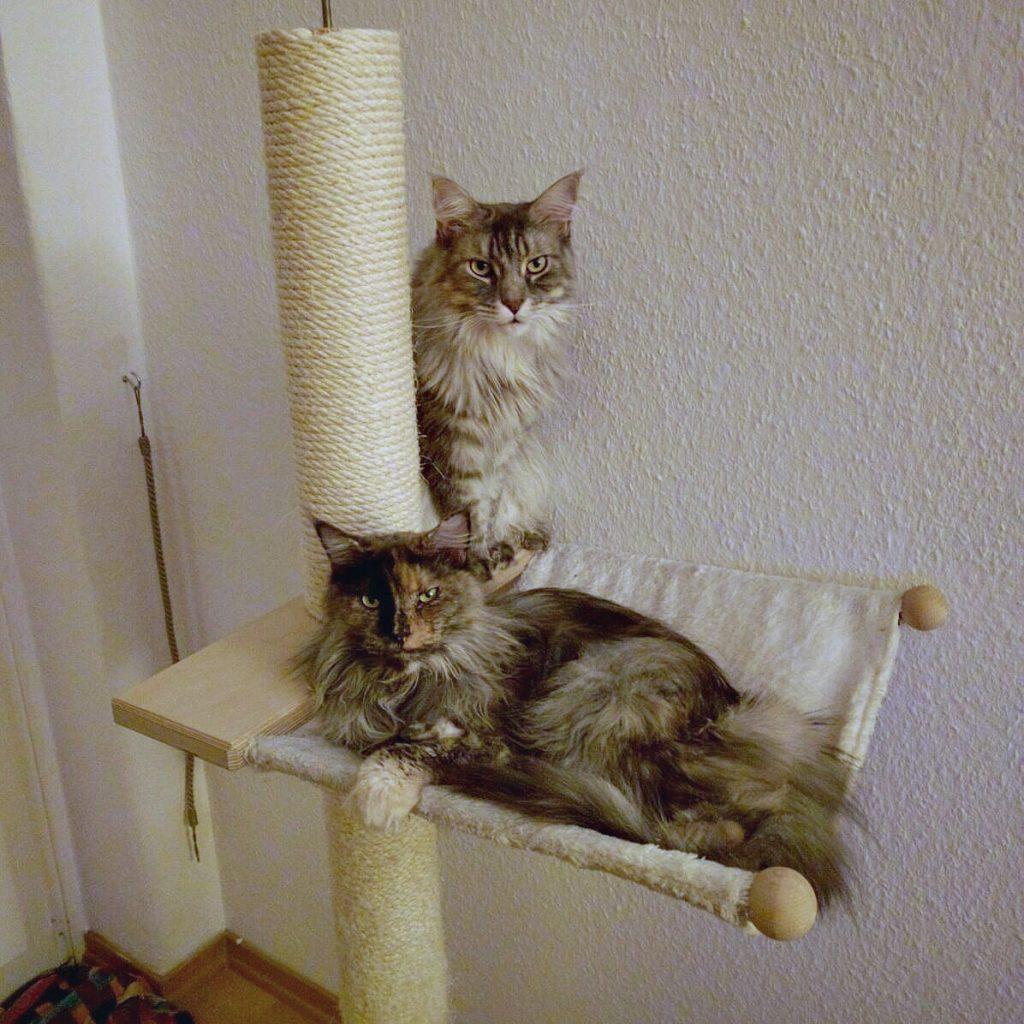 160831 002 katten
