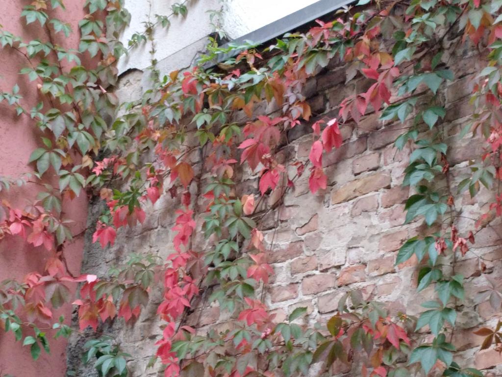 009-herfst